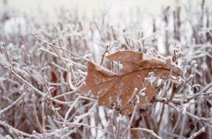 winter-hiver-givre