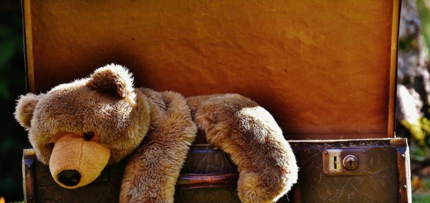 ourson dans une valise